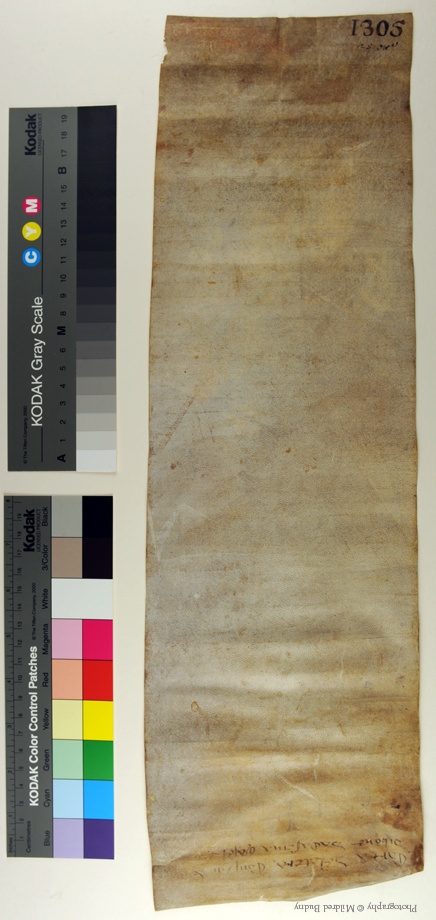1305 Italian notarial roll, dorse unrolled. Photography © Mildred Budny