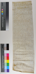 Italian notarial roll of 1305 unrolled, face. Photography © Mildred Budny
