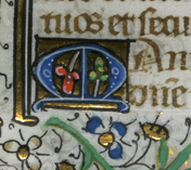 Detail of verso of a leaf from the Office of the Dead in a Book of Hours, with the polychrome Initial M (of 'Manus') with an inset pair of trefoil leaves or fruits against gold leaf background. Photograph © Mildred Budny