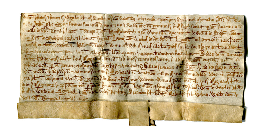 The deed of sale of of land at Preston circa 1200 with its tag (for a seal) severed, and with the seal missing. The owner acquired it in this sad state.