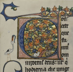 Initial C of 'Concede'. Detail from a leaf from 'Otto Ege Manuscript 15', the 'Beauvais Missal'. Otto Ege Collection, Beinecke Rare Book and Manuscript Library, Yale University. Photograph by Lisa Fagin Davis. Reproduced by Permission