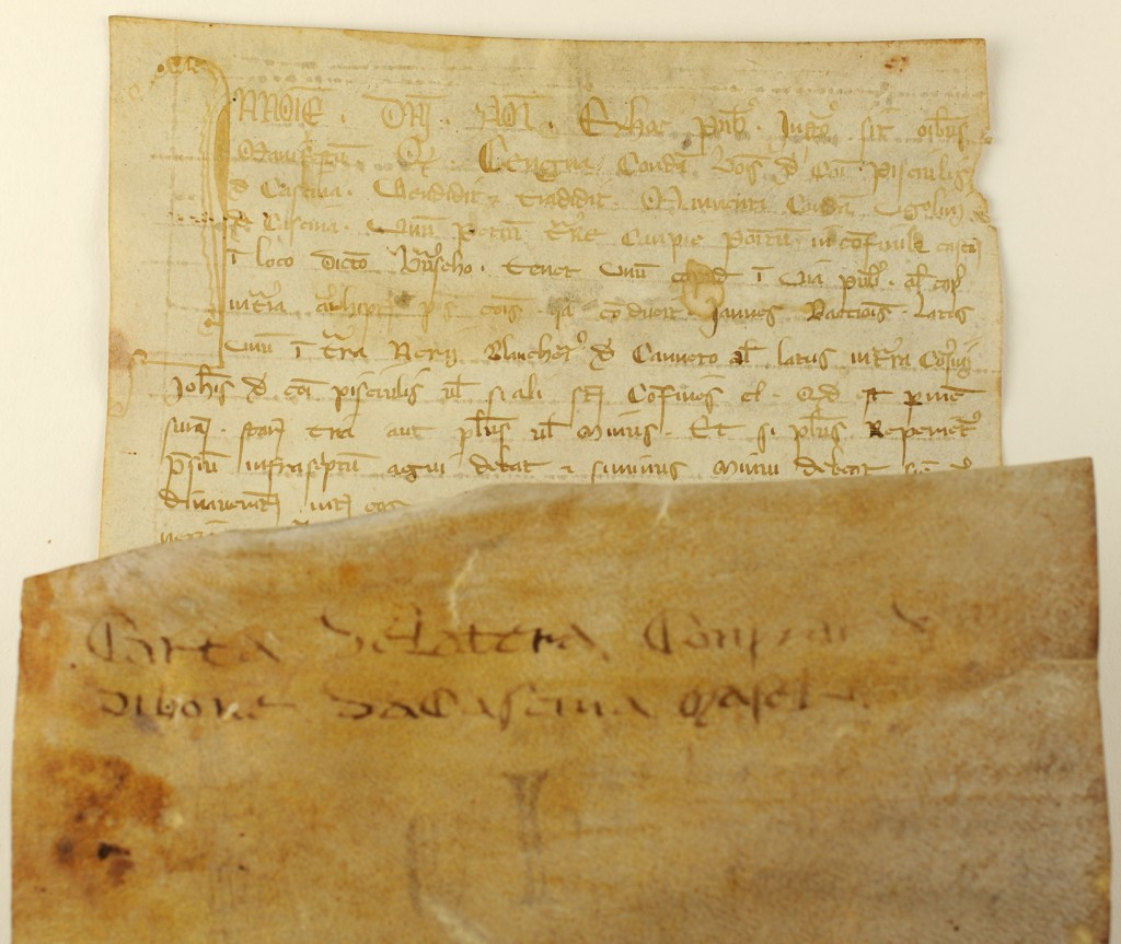 Top of the face of the 1305 notarial document from Cesena, Italy, with opening initial and first lines of text in brown ink. Shown in front of this portion of the document is the opposite end of the dorse of the document, with a 2-line docketing inscription describing the contents in Italian in somewhat darker brown ink. Photography © Mildred Budny