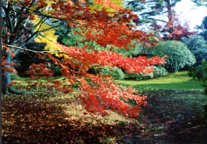 Imperial Palace Gardens Kyoto 29 November 1992 Photo © Mildred Budny