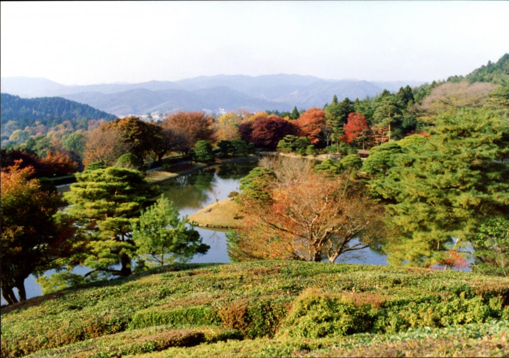 Kyoto Imperial Palace grounds on 30 November 1993. Photograph © Mildred Budny.