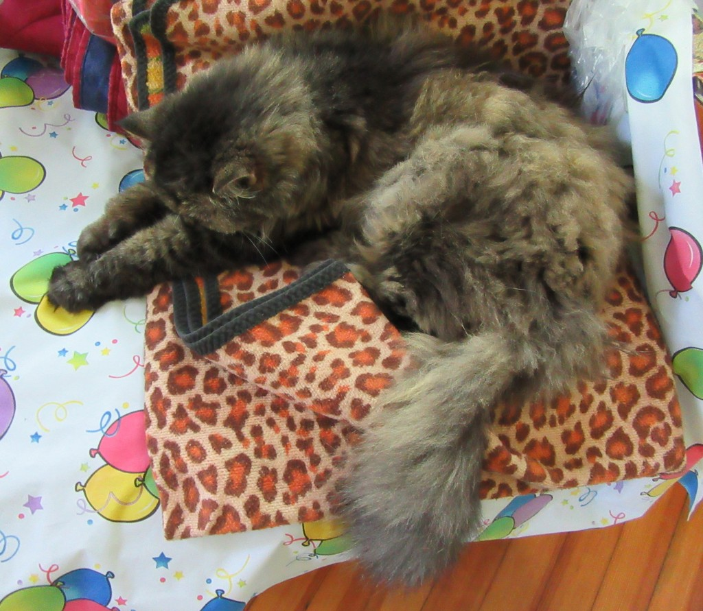 Mistie stretches out in a full snooze upon a blanket patterned after a Big Cat. Photography © Mildred Budny.