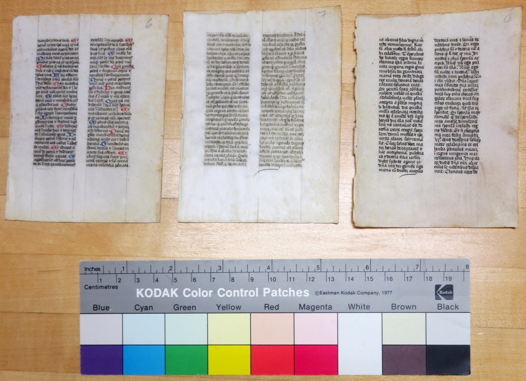 Set of 3 Separate Leaves on Vellum from a Small-Format Religious Handbook in a Private Collection.  Side by side, they face forward with their Rectos uppermost.  Photograph by Mildred Budny.